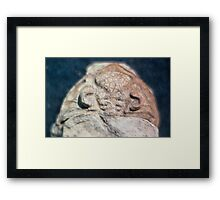 Dalmanites (trilobite) cephalis fossil from Usk, Monmouthshire Framed Print