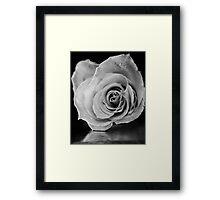 Black and white rose. Framed Print