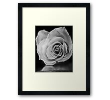 Black and white rose. Framed Print