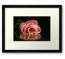Pink rose. Framed Print