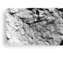 Fuchsella (bivalve) fossils from Usk, Monmouthshire Canvas Print