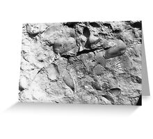 Fuchsella (bivalve) fossils from Usk, Monmouthshire Greeting Card