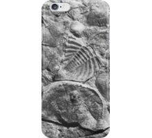 Trilobite and brachiopod fossils from Usk, Monmouthshire iPhone Case/Skin
