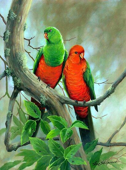 Australian King Parrots by eric shepherd