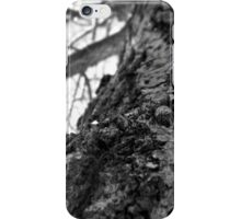 NYC Central Park Winter 5 iPhone Case/Skin