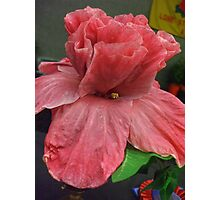 CUP and SAUCER - HIBISCUS Photographic Print