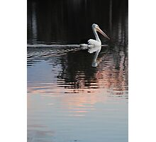 Pink Pelican Photographic Print