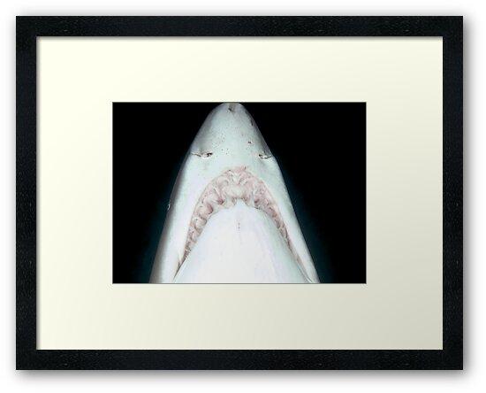 Jaws by Melissa Fiene