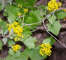 Unfocused plant  by Samuel Thompson