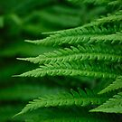 Fern by Rowan  Lewgalon
