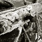 Nails On A Boat by rorycobbe