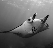 Manta Pose B&W by MattTworkowski