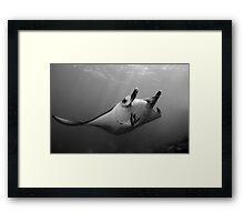 Manta Pose B&W Framed Print