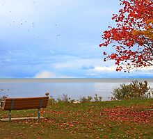 A seat by the lake. by Dipali S