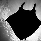 Manta Silhouette B&amp;W by MattTworkowski