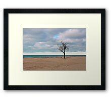 A tree by the lake. Framed Print