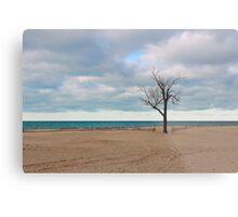 A tree by the lake. Metal Print