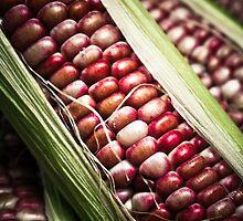 Colored Corn by Faye White
