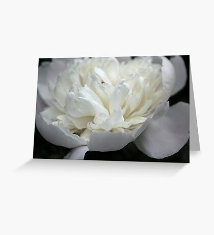 White and Black in Living Color Greeting Card