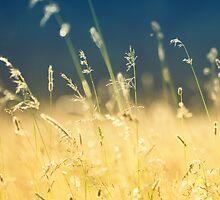 meadow by Georg Wacker