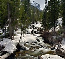 Cascades - On the Way to Hidden Falls by Stephen Beattie