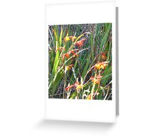 Red Tassie Flowers Greeting Card