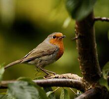 English Garden Birds by AnnDixon