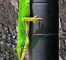 Green.Lizard by MartyMalliton
