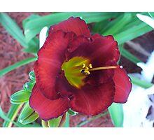 Lillies ! Photographic Print