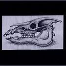 The Equine Skull by Sean Phelan