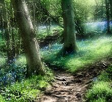 Bluebell Hill by Ann Garrett