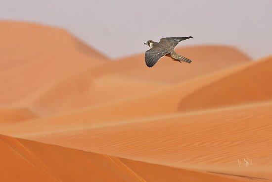 Falconiformes. sub Falconidae - sub fam Falconinae - gênero Falco - Página 2 Flat,550x550,075,f