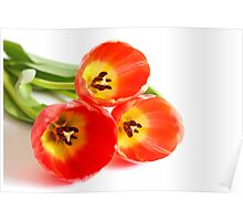 Three red tulips Poster