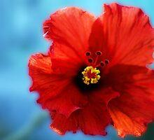 Red Hibiscus by John  Kapusta