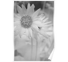 Infrared Flower Poster