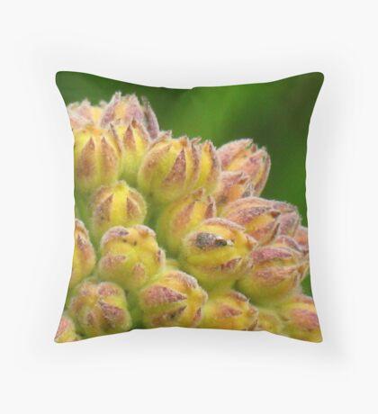Milkweed buds Throw Pillow