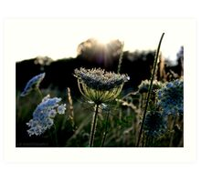 Sun ray flower Art Print