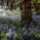 Bluebells by Ann Garrett