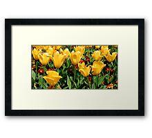 Flower Strip Framed Print