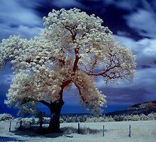 Tree (IR) #3 by PaulBradley