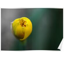 Simple Yellow Flower Abstract Poster