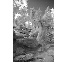Infrared Landscape 1 Photographic Print