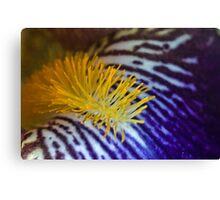 Iris close up Canvas Print