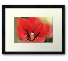 Tulip and Stamen Framed Print