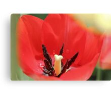 Tulip and Stamen Canvas Print