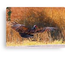 061409 Turkey Vulture Canvas Print