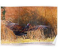 061409 Turkey Vulture Poster