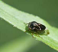 leaf hopper by jude walton