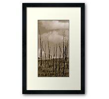 Texas Bush Framed Print