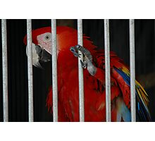 Pretty Polly Photographic Print